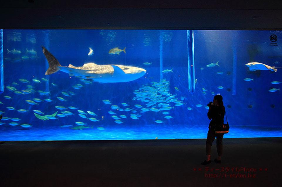 かごしま水族館写真